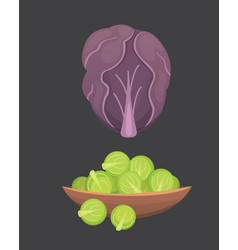 Printset cabbage and lettuce vegetable vector