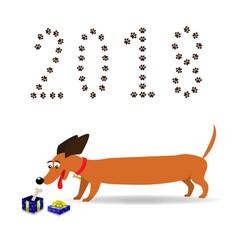 cute cartoon long dachshund watching on gift box vector image