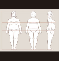female body lines and proportions for sewing vector image