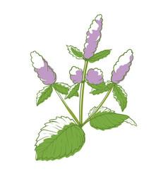 mint flower floristics and decor natural symbol vector image