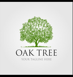 oak trees logo design vector image