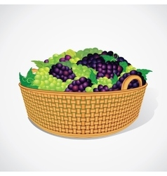Ripe Sweet Grapes in Woven Basket vector