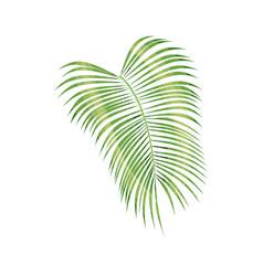 Tropical palm leaf vector