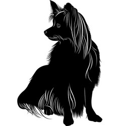 Dog papillon butterfly vector