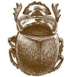 engraving antique sacred scarab vector image