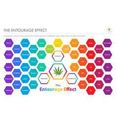 Entourage effect overview horizontal business vector