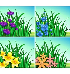 Four scenes of flowers and grass vector