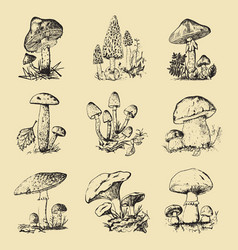 mushroom set hand drawn engraved vintage organic vector image