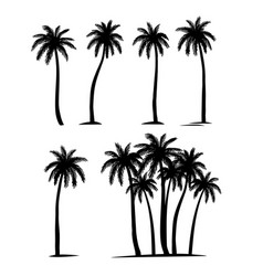 Palm trees silhouette coconut set vector