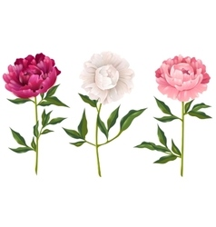 Peonies Realistic Set vector image