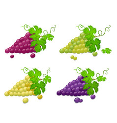 set of ripe green and red grapes on a white vector image