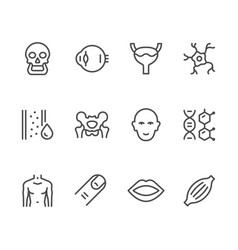 set line icons of human organs vector image vector image