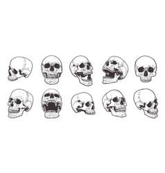anatomical skulls set vector image