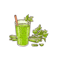 Celery smoothie in glass - healthy green blended vector