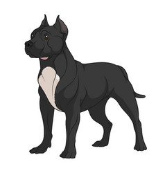 color a black pit bull with white vector image
