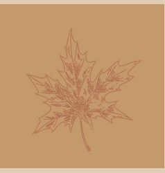 hand drawn maple leaf outline maple leaf in line vector image