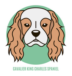 portrait of cavalier king charles spaniel vector image