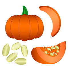 Set of pumpkin seeds and slices isolated on white vector