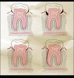 teeth desna Sepia vector image