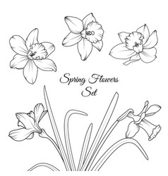 narcissus spring flowers reusable elements set vector image vector image
