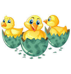 three little chicks hatching eggs vector image