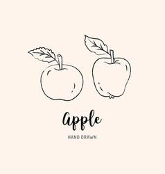 apple drawing hand drawn apples sketch of vector image