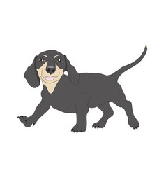 dachshund stands dog vector image