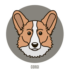 portrait of corgi in style of flat vector image