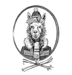 Alpaca lama skier character or guanaco athlete vector