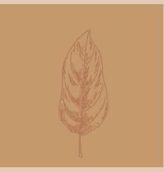 hand drawn leaf outline autumn leaf in line art vector image