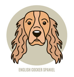 portrait of english cocker spaniel vector image