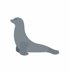 Seal animal vector