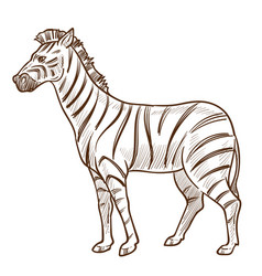 african animal zebra isolated sketch striped vector image