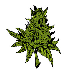 Cannabis drawing design vector