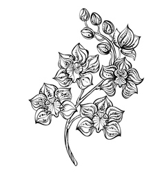 contour orchid vector image
