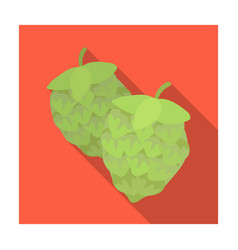 Green hops plant for brewing beer the main vector
