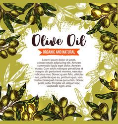 Green olive branch poster for oil label design vector