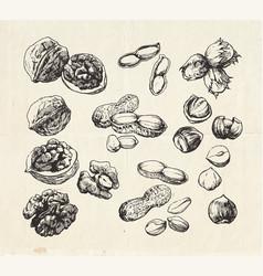Nut set vector