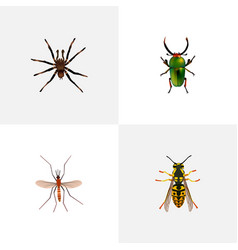 Realistic insect bee gnat and other vector