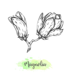 Hand drawn magnolia flower sketch floral vector