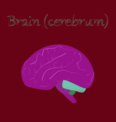 human organ icon in flat style brain vector image