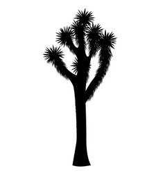 Joshua tree isolated on white background vector