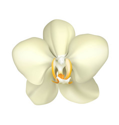 Tropical orchid realistic isolated vector