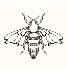 Hand drawn engraving Sketch of Bee for tattoo and vector image