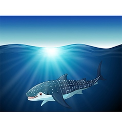 cartoon whaleshark on the sea vector image