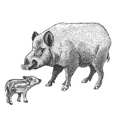 Engraving boar vector