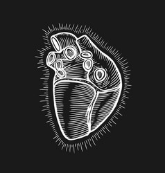 hand drawn human heart vector image