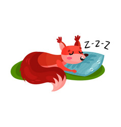red squirrel sleeping on soft pillow outdoor vector image