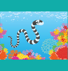 sea snake and corals vector image