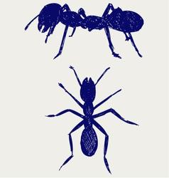 Portrait of ant vector image